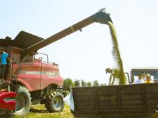 starea-agriculturii