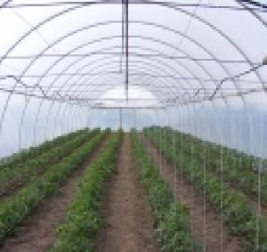 solarii-legume