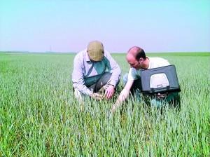 asigurari-agricultura