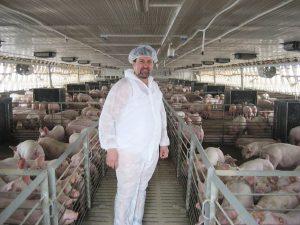 Ferma de porci: Cum gândim un plan de lucru pentru o afacere profitabilă