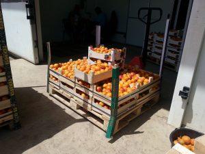 fructe-refuzate-de-occident-ajung-in-Romania