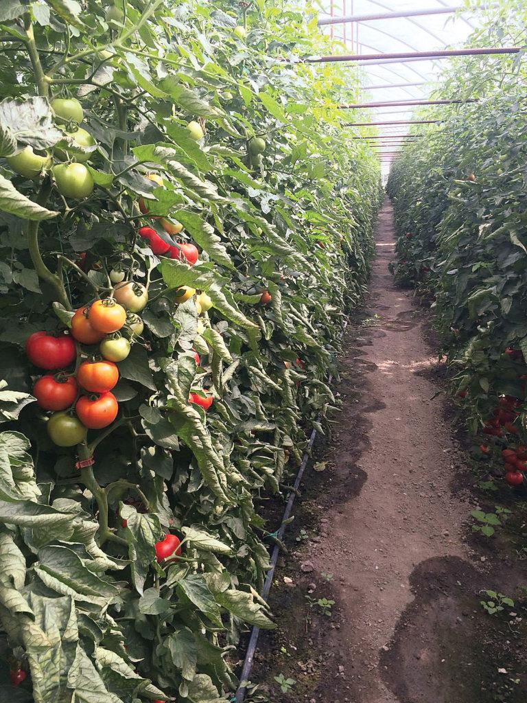 Producatori de flori si legume