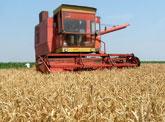 piata-cerealelor