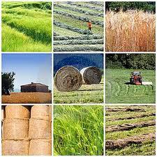 economia rurala