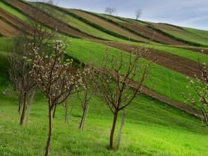 agricultura-slovacia