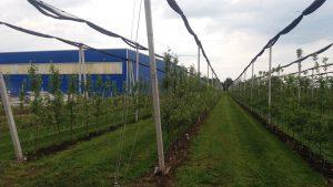 Bauelemente-prefabricate-din-beton-spalieri-pentru-agricultura