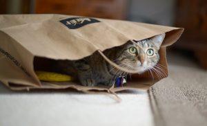 pisica-in-punga