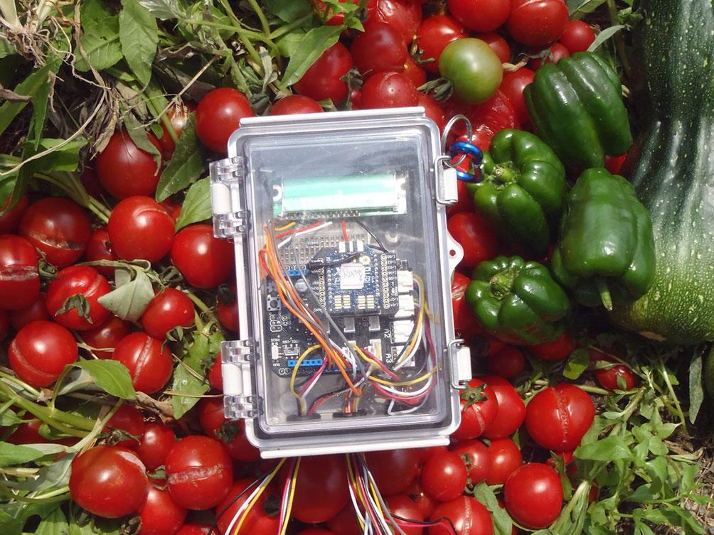 plante-cu-senzori