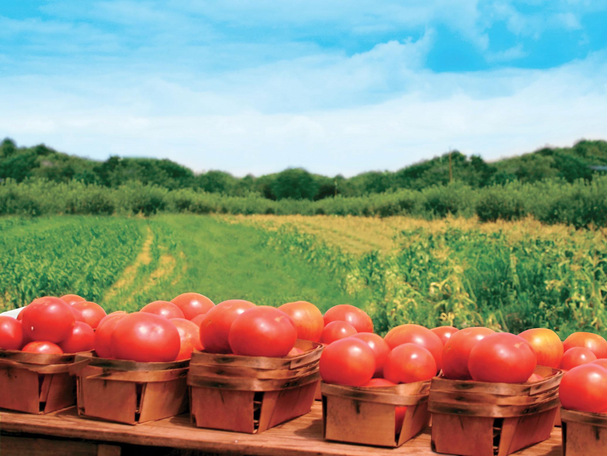 Agricultura ecologică, între mărire și decădere   Agro ...